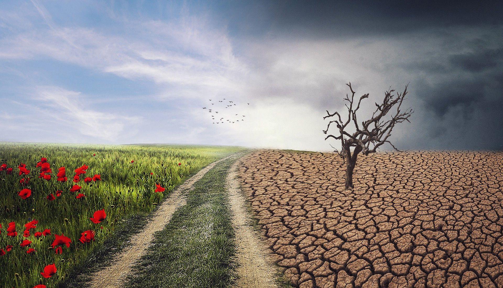 Les sols et l'agriculture