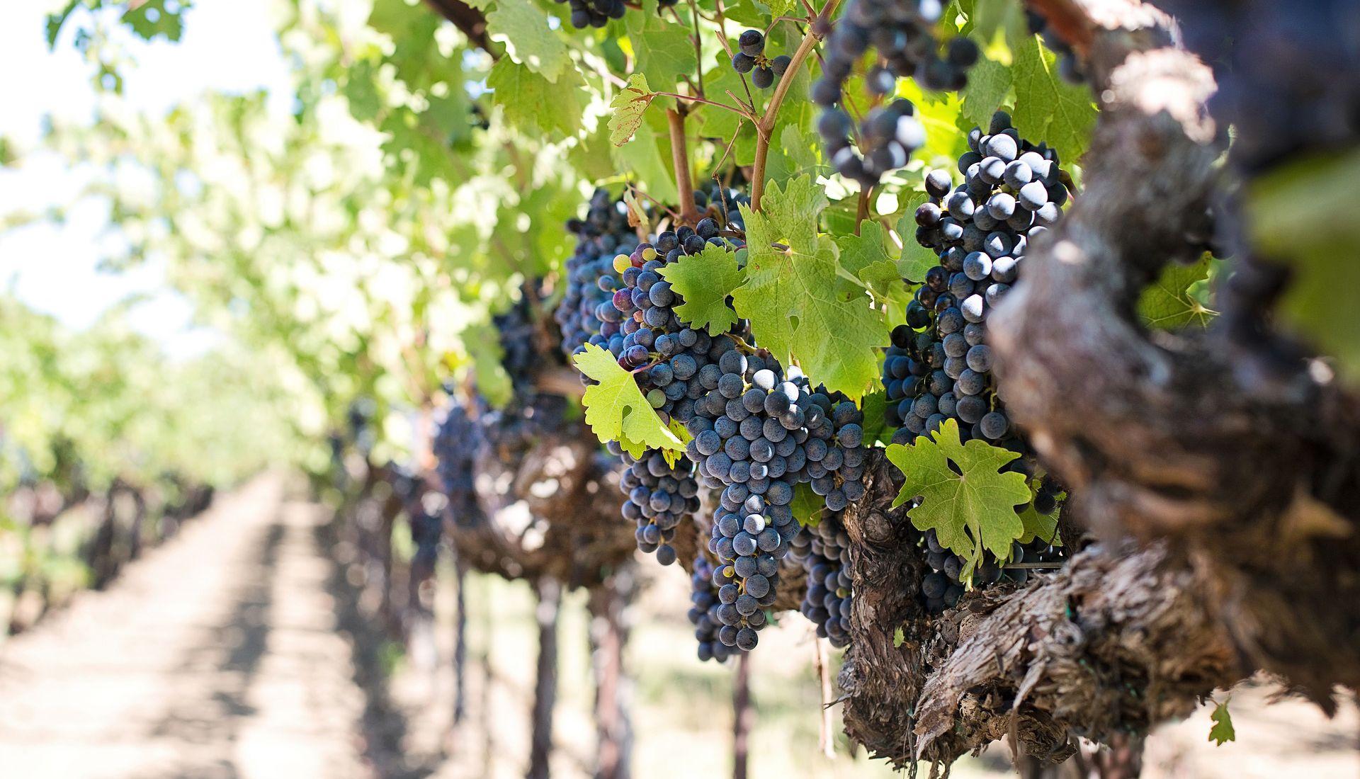Anglais spécialisé viticulture
